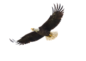 Eagle Flying at Tall Pines Resort, Tall Pines Grocery, Sunoco, Hardwood Hotel, Tall Pines Propane, Iron County, MI